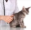 Ветеринарные клиники в Воркуте